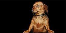 Tierportrait / Hundeportrait ©Sarosdy